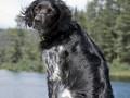 Une vie de chiens_500