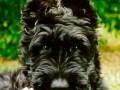 Une vie de chiens_506