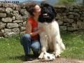 Une vie de chiens_539