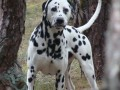 Une vie de chiens_550