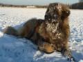 Une vie de chiens_552