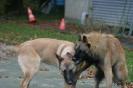 Une vie de chiens_78