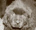 Une vie de chiens_81