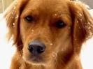 Une vie de chiens_82