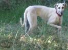 Une vie de chiens_86