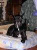 Une vie de chiens_97