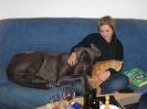 Une vie de chiens_99